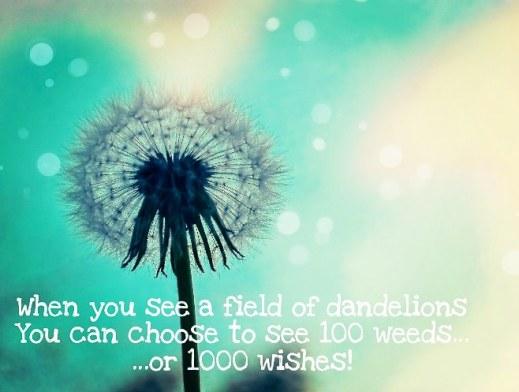 Choose Wishes Wayward Dandelion